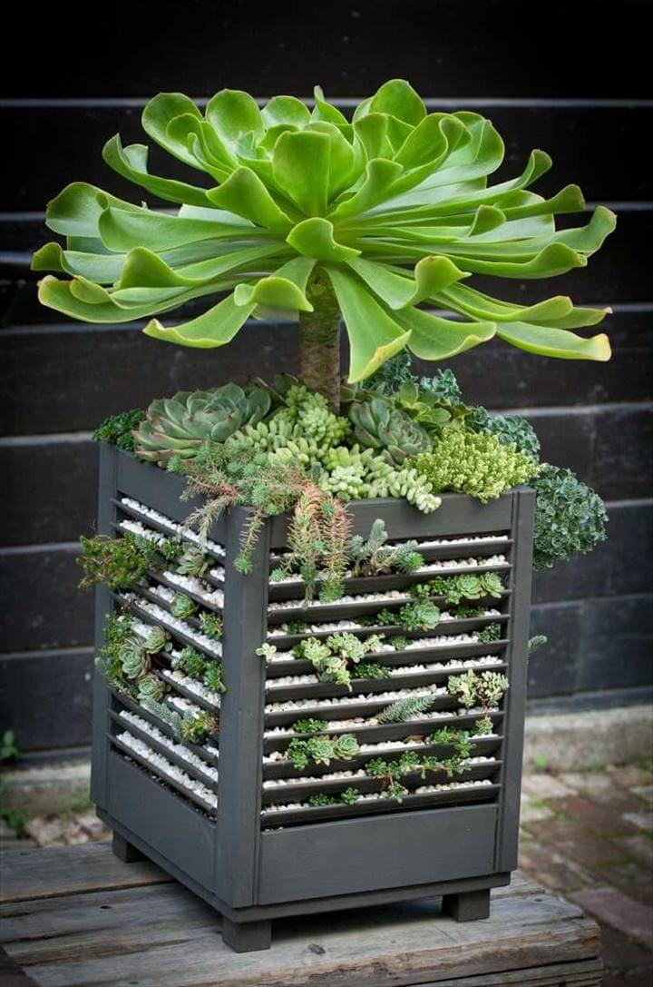 DIY Decorative Gravel Succulent Pot