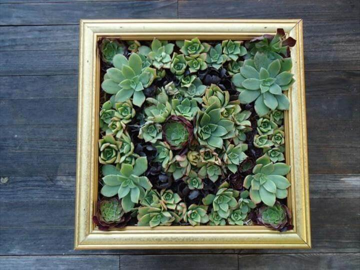DIY Old Frame Succulent Wall Display