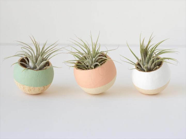 DIY Painted Air Plant Bell Cups