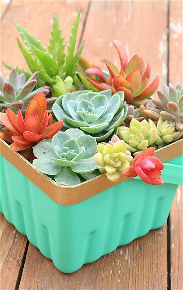 Diy Succulent Projects 60 Ways To Display Succulents In