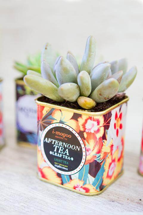 DIY Succulent Tea Tins