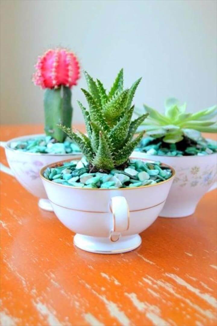 DIY Succulent Teacups
