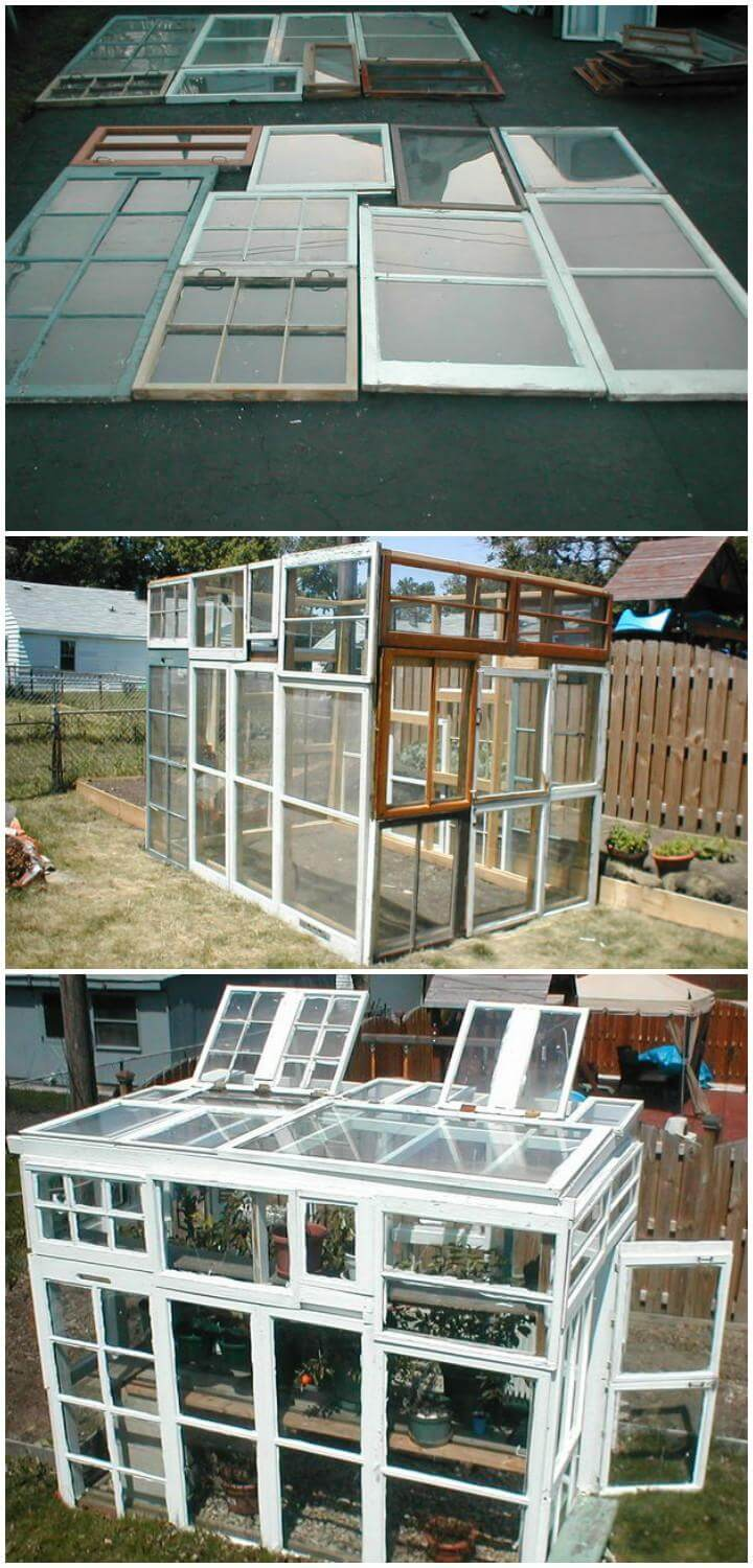 DIY Greenhouse Built From Old Windows