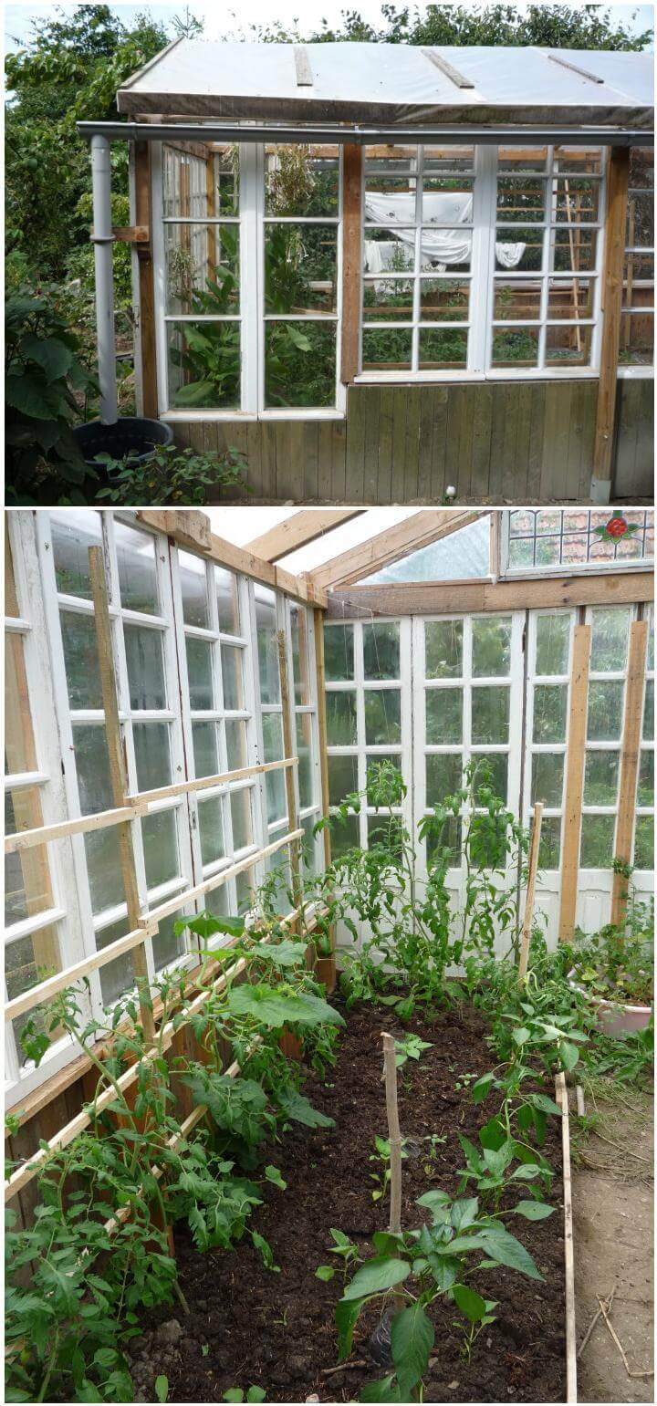 DIY Pallet and Old Windows Greenhouse