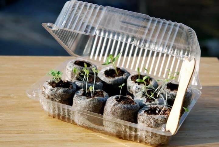 DIY Repurposed Plastic Container Mini Greenhouse