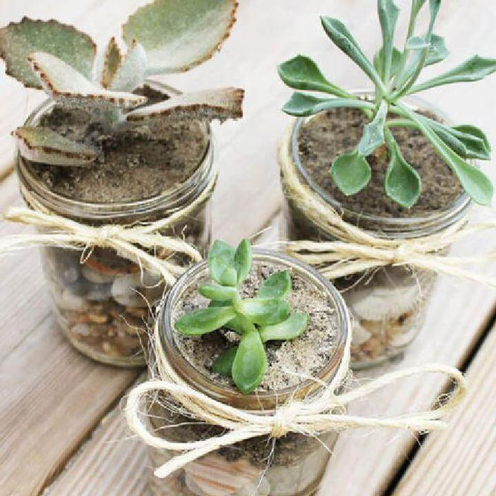 DIY Easy and Cute Mason Jar Succulents
