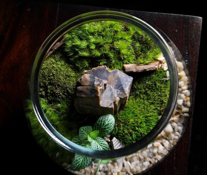 DIY Homemade Mason Jar Terrarium