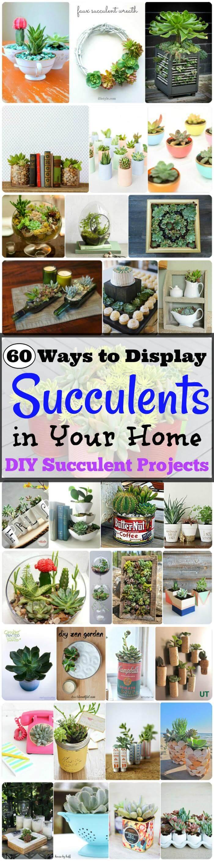 DIY Succulent Projects