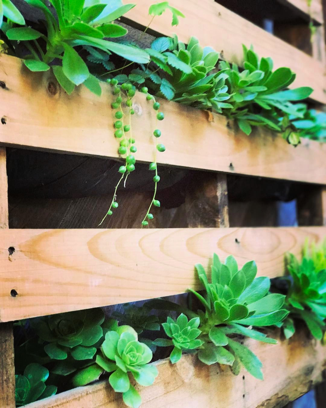 Herb Planter from an old pallet.