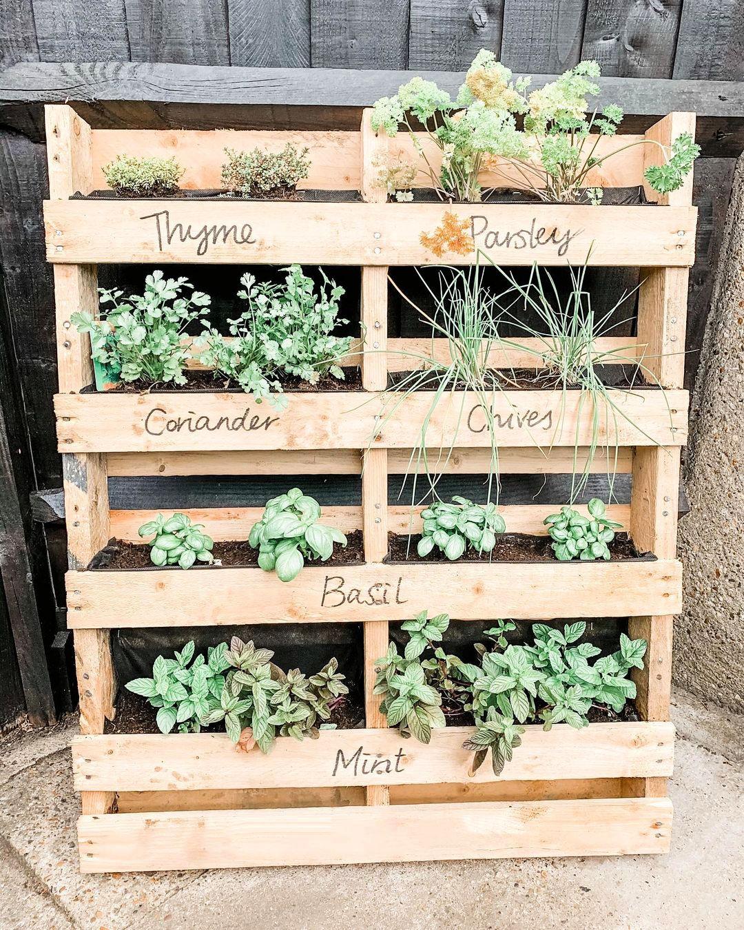 My little pallet herb garden smells lovely